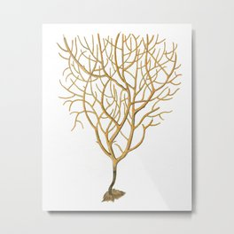 Sea Coral No.6 Antique Natural History Print. Metal Print