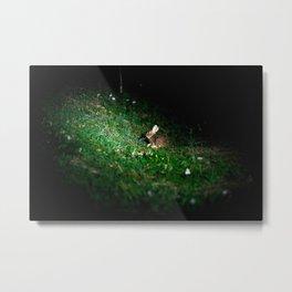Rabbit Photography Art - Taiwan Hare - eat Metal Print