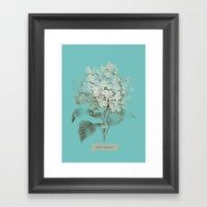 HYDRANGEA 3 Framed Art Print