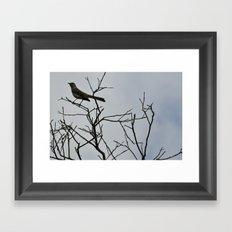 Nestling Framed Art Print