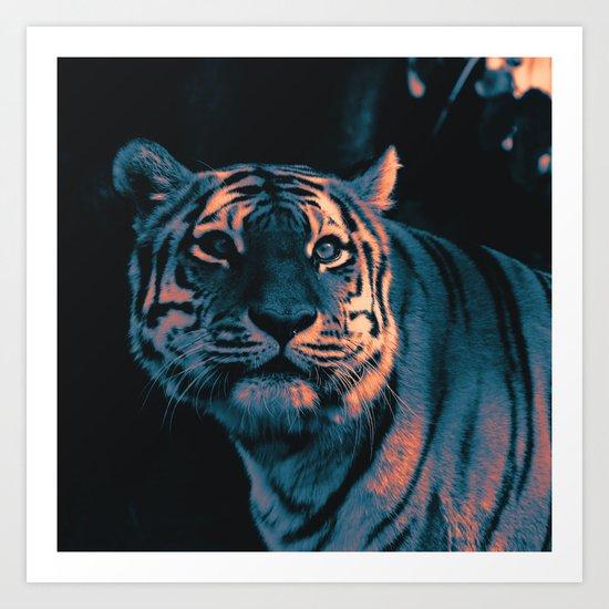 Tiger, Sunset by mehrfarbeimleben