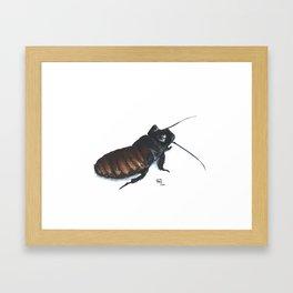 Madagascar Hissing Cockroach Framed Art Print