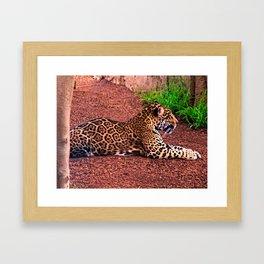 Classic Jag Framed Art Print