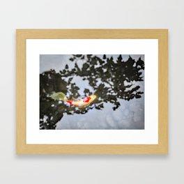 Koi in Japanese Maple Shadows Framed Art Print