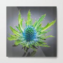 Blue Eryngium Metal Print