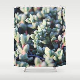 Succulent Fleshy Plant Shower Curtain