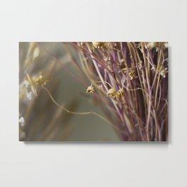 Dry flowers Metal Print