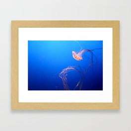 Jellyfish in the Blue Framed Art Print