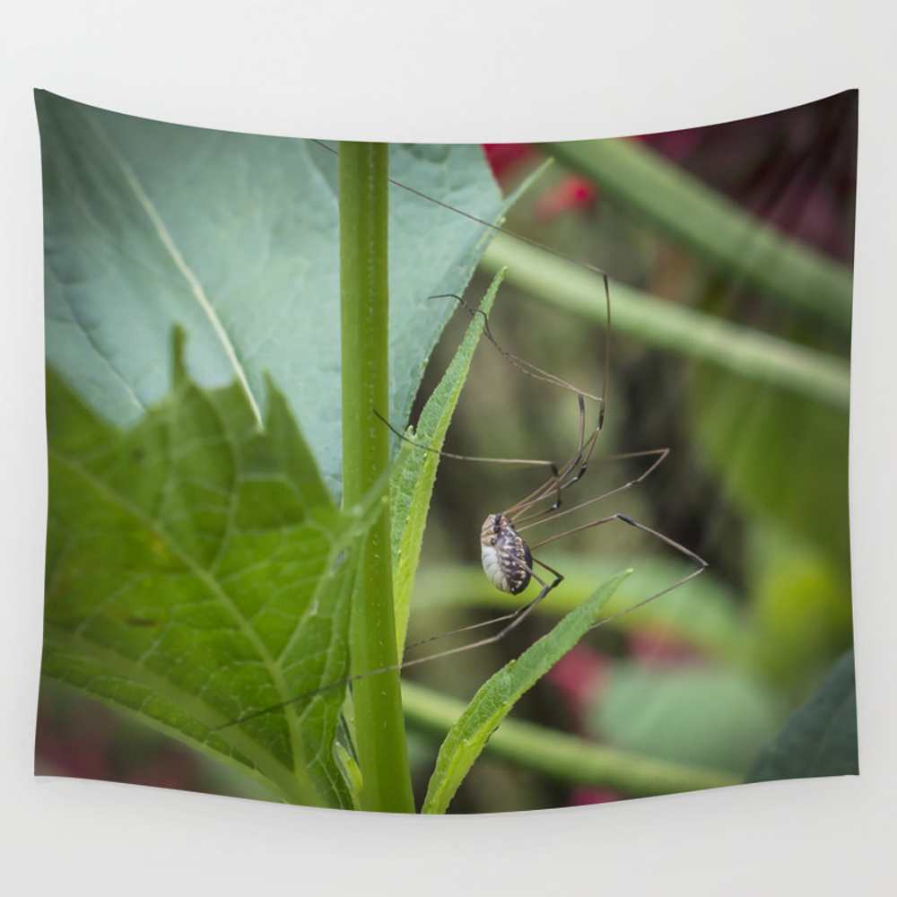 Daddy Longlegs Wall Tapestry by Robertraney TPS2509200