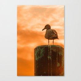 Seagull dreams Canvas Print