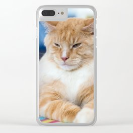 Red-white tabby Maine Coon cat Clear iPhone Case