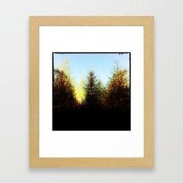 Symmetrical Fir Framed Art Print