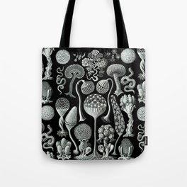Ernst Haeckel - Mycetozoa (black) Tote Bag