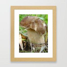 Wild mushroom (Boletus edulis, porcini) Framed Art Print