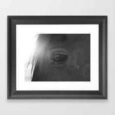 Equine eye Framed Art Print