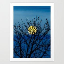 Night Birds Art Print