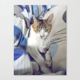 Getting Comfy Canvas Print