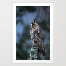 LONG-EARED OWL ON POST Art Print