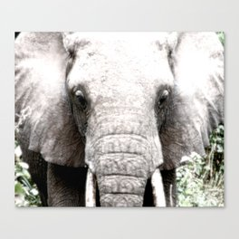 Animal Art Elephant Face Canvas Print