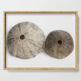 Sea Urchin Shells Serving Tray