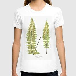 Asplenium Marinum (Sea Spleenwort) from Ferns British and Exotic (1856-1860) by Edward Joseph Lowe T-shirt