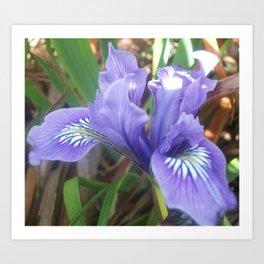 Pretty Purple Iris Art Print