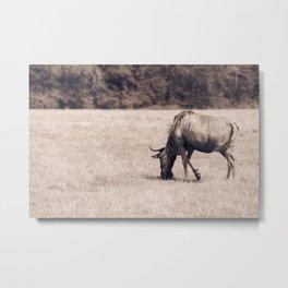 The blue wildebeest Metal Print