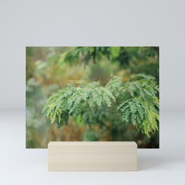 Tropical Ferns Mini Art Print