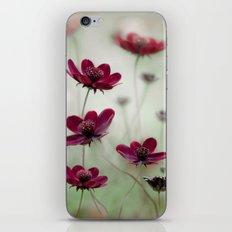 Cosmos sway iPhone & iPod Skin