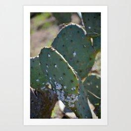 Spring Cactus Art Print