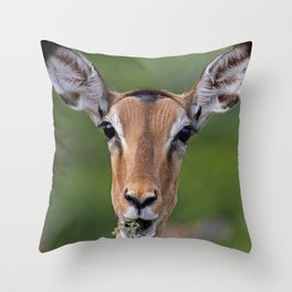 Surprise! Impala, Africa, wildlife Throw Pillow