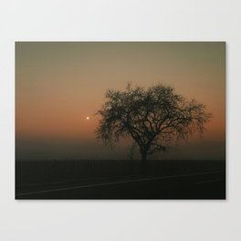 Pink Fog Canvas Print