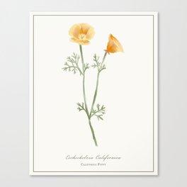 California Poppy Watercolour Botanical Canvas Print
