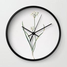 Vintage Three-Cornered Leek Illustration Wall Clock