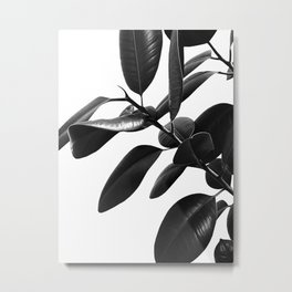 Ficus Elastica Black & White Vibes #1 #foliage #decor #art #society6 Metal Print