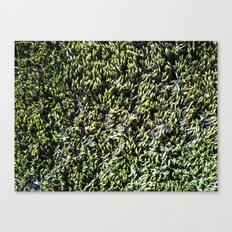 moss texture Canvas Print