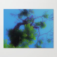 Trees in Heaven Canvas Print