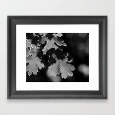 Sunlit Oak Leaf Framed Art Print