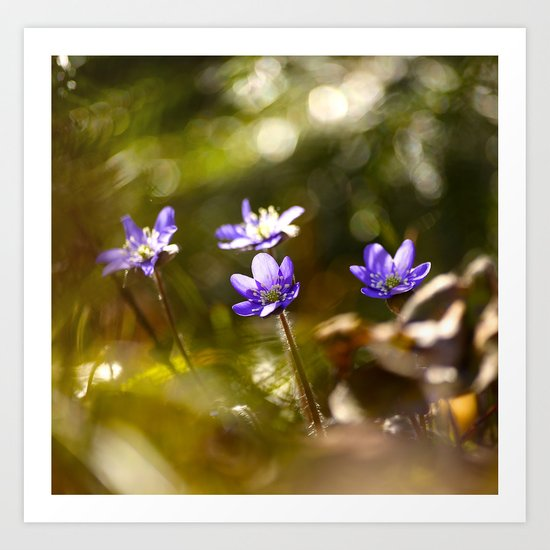Beautiful Surprise In Spring Forest Art Print