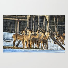 Whitetail Deer Stare Down Rug