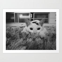 kitty ready to pounce Art Print