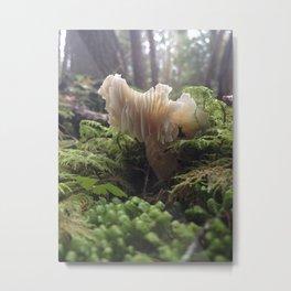Sun kissed mushroom Metal Print
