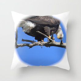 Alaskan Bald Eagle - Quizzical Throw Pillow