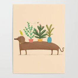 Dachshund & Parrot Poster