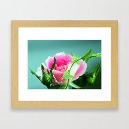 Rose before the beetles got it Framed Art Print