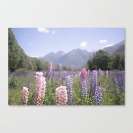 Fields of Flowers - Southland, New Zealand Canvas Print