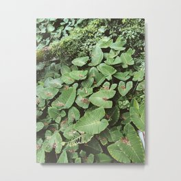 Hawaiian Foliage pt. 2 Metal Print