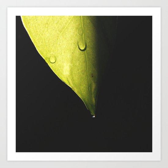 Leaf, water droplets & sunlight Art Print