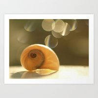 seashell Art Prints featuring Seashell... by Nature In Art...