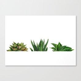 succulents triple Canvas Print